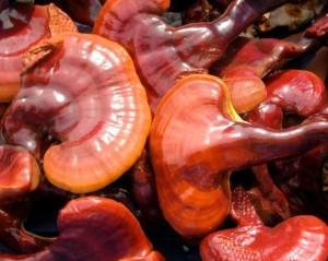 Rei shi mushroom (Ganoderma Lucidum)
